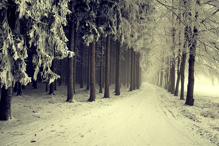 wonderWinter Snow, Snow Forests, Band Of Brother, Winter Wonderland, Dark Forests, Snow Covers Trees, Looks Forward, Roads