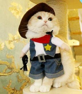 Choose Costume For Cat