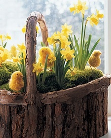 Martha Stewart  Spring-time Basket with Easter Chicks