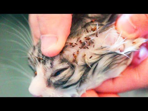Natural Cure For Worms In Cats