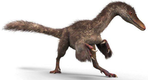 Čínský výzkumník Lid Xing objevil 99 miliónů let staré dinosauří peří v pouličním bazaru v Barmě