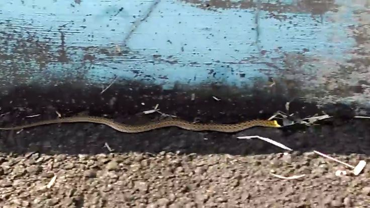 Ini ular apa ya gaes? kecil begini ada warna kuning nya.