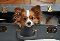 Quick Guide to Pet Friendly Extended Stay Hotels in Las Vegas