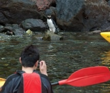 See nature up close kayaking in Milford Sound