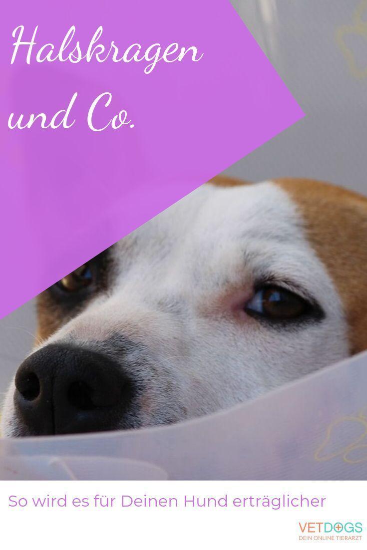 Halskrause Leckschutz Beim Kranken Hund Und Alternativen Dazu In 2020 Hunde Tierarzt Halskrause Hund
