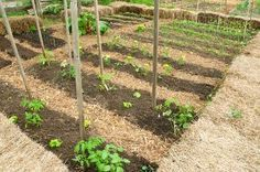 Crop rotation: list of families w/crops, and what should follow what. Not a quick read but much more in-depth than a simple 4-family rotation schedule. Better for those of us who are amending poor soil as we go.