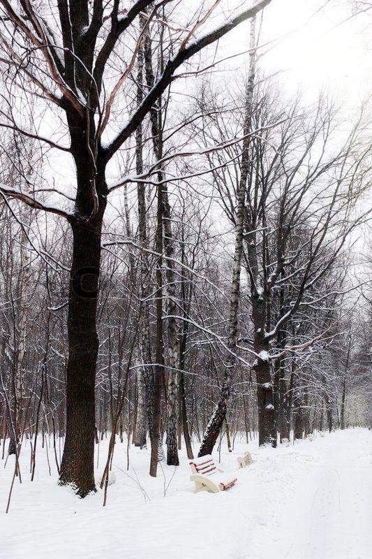 Stock foto af 'Silent snedækkede bypark i vinteren.'