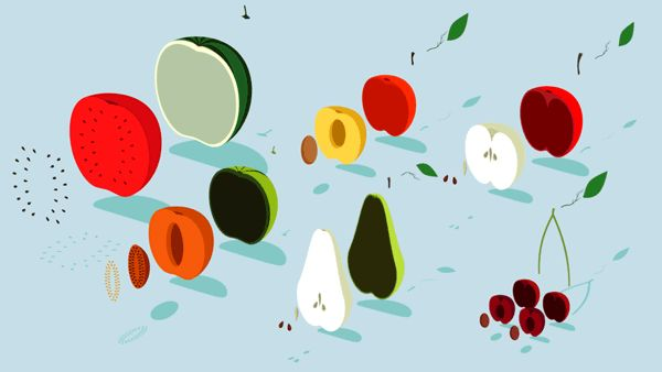 - INSTRUCTION OF FRUIT - on Behance