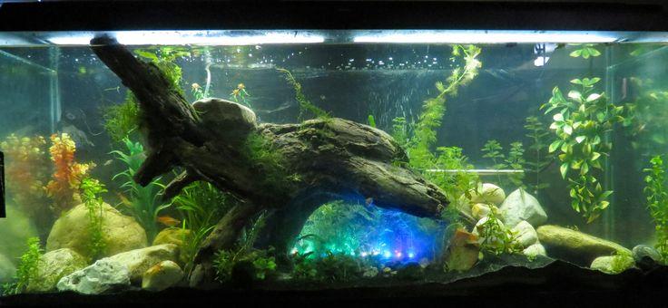 Fish tanks aquarium and 55 gallon on pinterest for Fish for 55 gallon tank