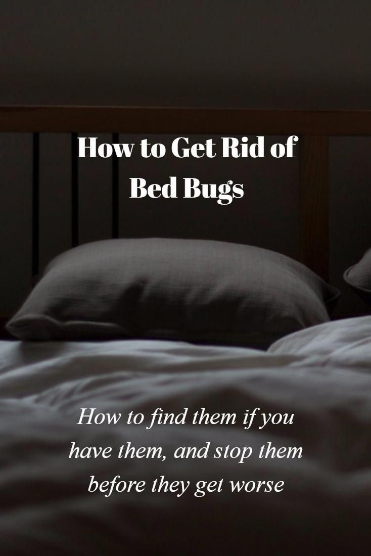 Pest Control Measures For Effective Flea Prevention Bed Bugs Rid Of Bed Bugs Bed Bugs Infestation