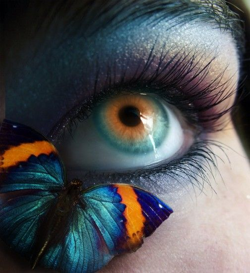 Eye And Butterfly...