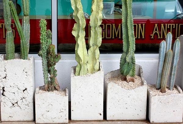 : Sweet Planters, Howl'S Interiors, Cacti And Succulents, Indoor Cactus Gardens, Native Plants, Diy Planters, Big Red, Red Sun, Concrete Planters