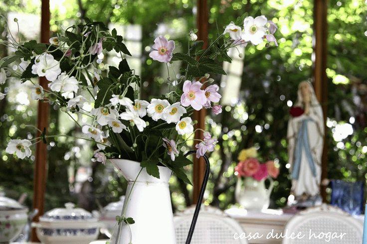 Anémonas Japónicas - casa dulce hogar
