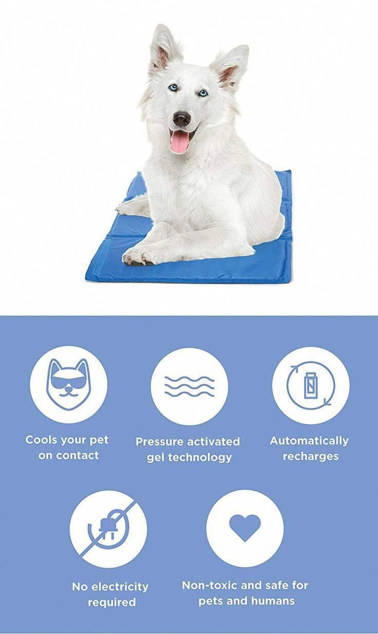 Industrious Recorded Command For Dog Training Find Out How Dog