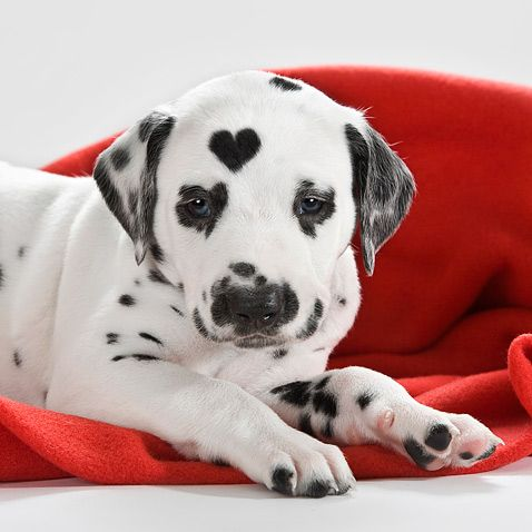 A dog with a heart.