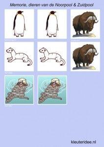 Memorie voor kleuters, dieren van de Noordpool en Zuidpool 3, kleuteridee.nl , Memorygame arctic animals, free printable.
