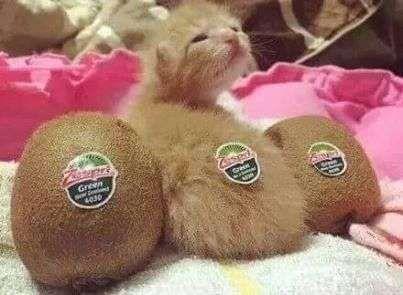 Kiwi Kitten!