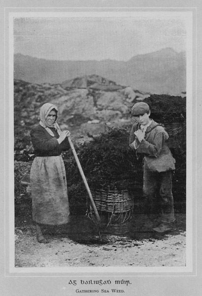 A range of shellfish and edible seaweed, such as dulse and sloak was gathered from the rocky shoreline.  A brown seaweed known as leathach, 'wrack' was cut from the rocks and then mixed in with boggy soil from the mountainside to form a homemade fertiliser for the potato crop.    Seaweed was also dried in the sun and then burnt at a low heat in shallow pits. The ashes were known as Kelp and soda. Kelpwas sold to town merchants.