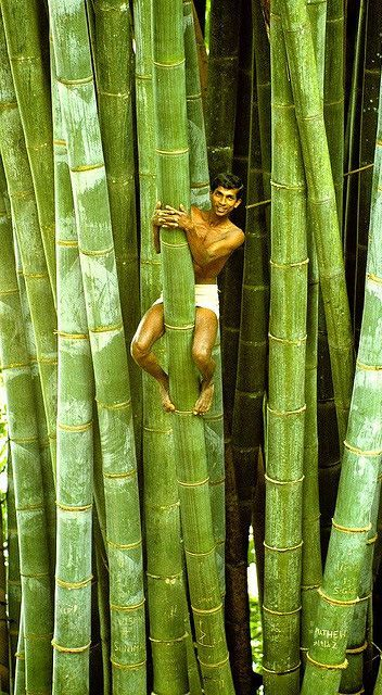holy smokes...these are huge!! it's bamboo a type of grass??