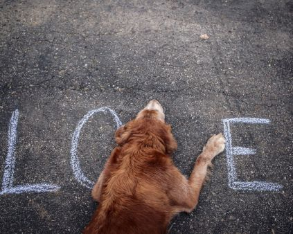 #beautiful_wallpaper #amazing #dogs #animals #animals_love #hd_wallpaper #love. http://alliswall.com/love/beautiful-love-text