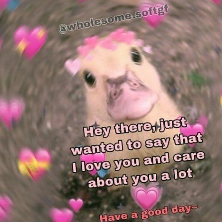 Goodnight H Wholesomememes Meme Duck Duckmemes Wholesome Cutememes Memes Animals Animalmemes Ducks G Love You Meme Cute Love Memes Wholesome Memes