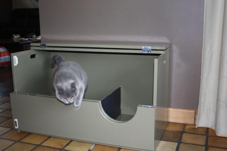 Werpkist 90 breed met blauwe britse korthaar kat. Kitten nursery