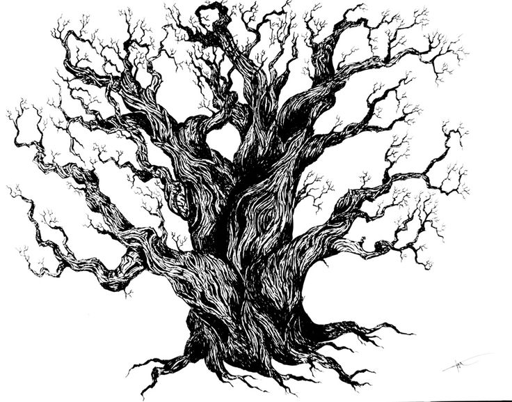 Dead oak tree drawing images for Best tree drawing