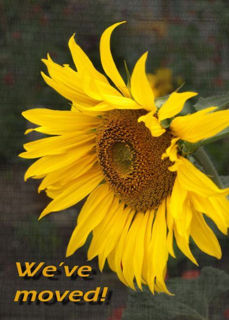 Bright Sunny Sunflower - Moving Announcement card | Thank ...