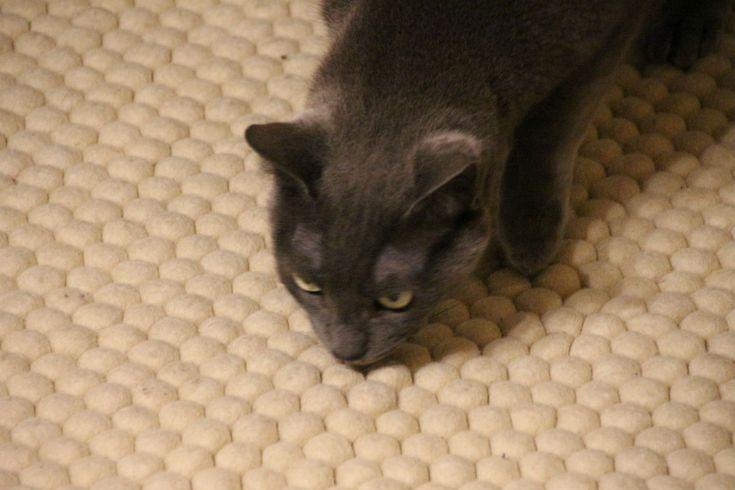La morbidezzaHai un animale domestico e pensi che un tappeto sia un lusso che non puoi permetterti? Noi di Sukhi stiamo per convincerti del contrario ;)Dai un'occhiata al nostro blog mensile con i consigli su come acquistare un tappeto pet-friendly: http://www.sukhi.it/blog/tappeti-e-animali-domestici-una-convivenza-possibile/   di un tappeto di palline