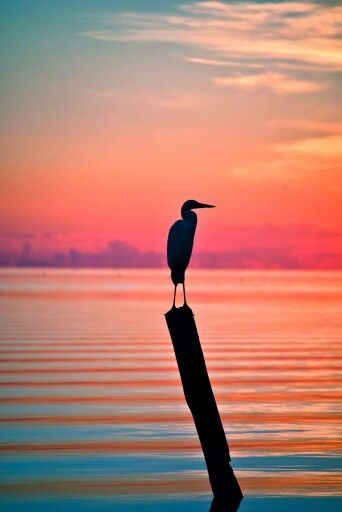 .Pink sunset°°