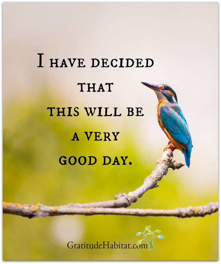 Yes, it will.  Visit us at: www.GratitudeHabitat.com