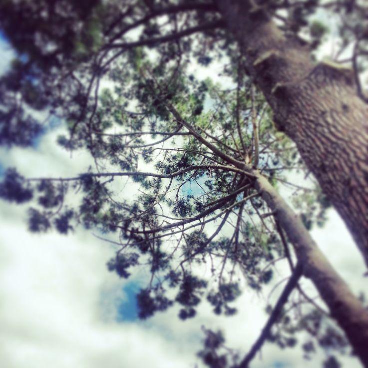 Trees…let my Spirit fly...