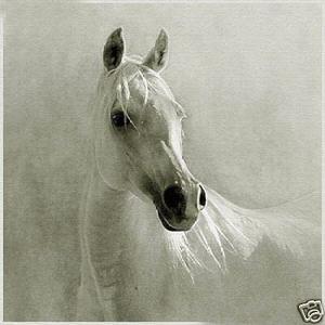 White horse oil painting. Beautiful horses...
