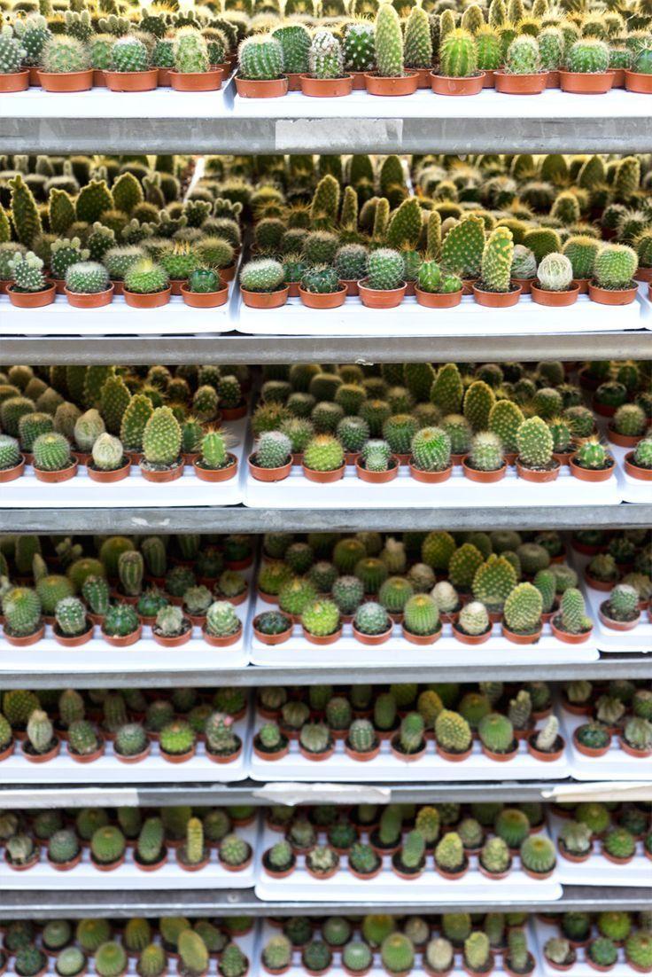 JOELIX.com | One million cactus plants
