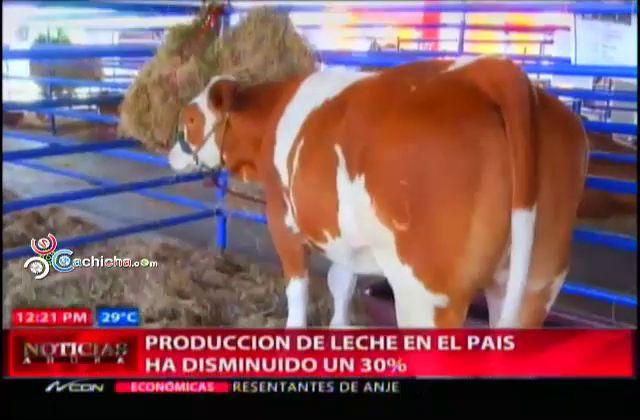 Producción De Leche En El Pais Ha Disminuido Un 30% #Video