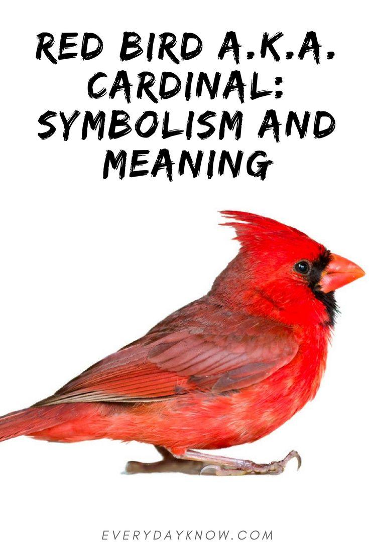 Red Bird Aka Cardinal Symbolism And Meaning Spirituality