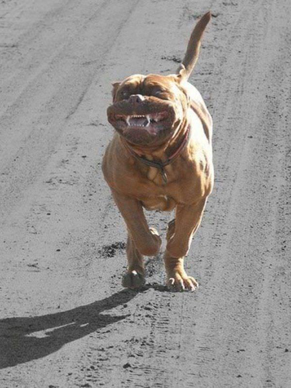Found On Bing From Www Funnydogsite Com Crazy Dog Videos
