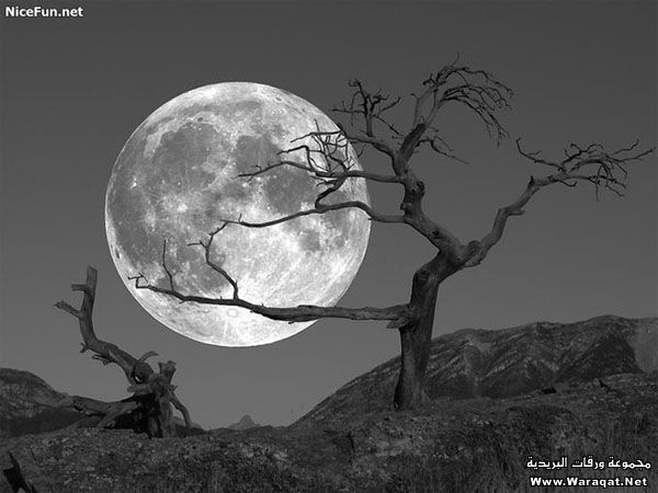 صور قمر وليل صور قمر جميل اجمل الصور صور جميلة Hd Shoot The Moon Beautiful Moon Moon