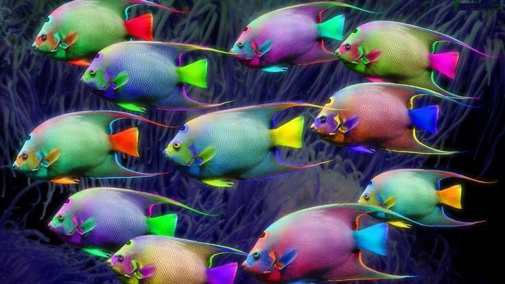 Tęczowe rybie serce  SOO SWEET!!! SOO PRETTY!!!