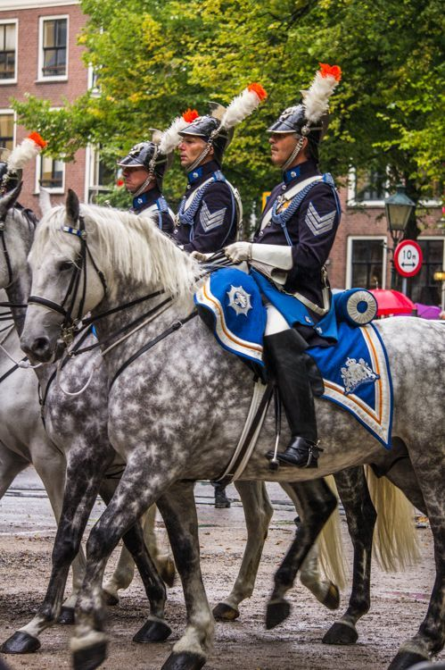 Horses in the Parade| Meet the Dutch Royal Family and Learn about Dutch Policics during Prinsjesdag in The Hague / Den Haag, The Netherlands || The Travel Tester
