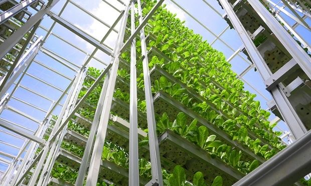 Vertical farming is all the rage in space-limited countries like Japan & Singapore! #groundchat