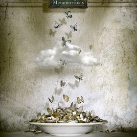 Metamorfosis by Oriol Jolonch