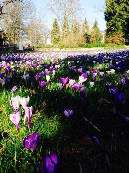 March 11, 2014: With all that Rocking, I almost forgot this. Frankfurt Botanic Garden today . Stunning !