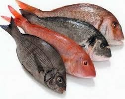 Το e - περιοδικό μας: Τα ψάρια, προστατεύουν τις γυναίκες...