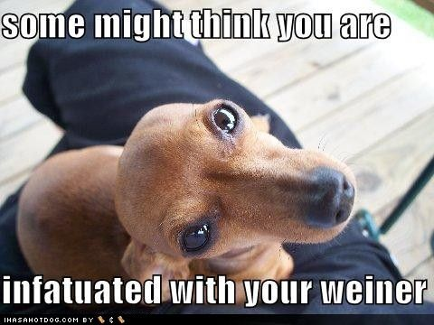 I am. Dachshund Weiner, Weenie Dogs, Funny Pictures, Doxie, Bing Image, Funny Stuff, Wiener Dogs, Dogs Tags, Animal