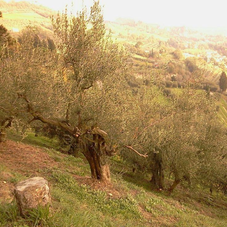 The Hills of Brisighella