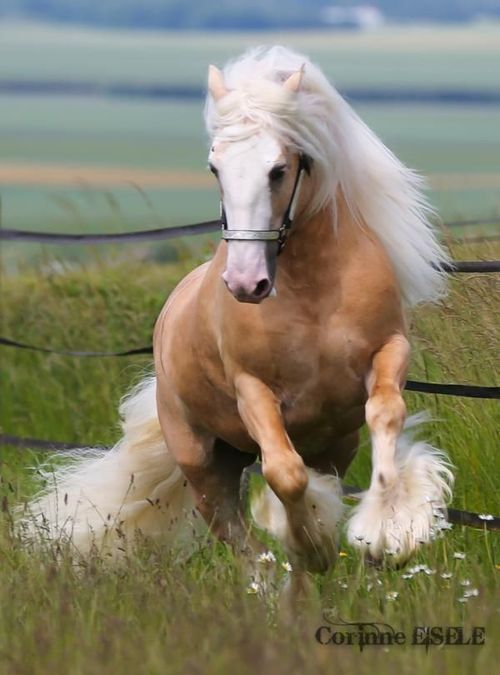 I'd LOVE to have a horse!! The feeling of getting onto a horse and letting the horse run as fast as he can is amazing!