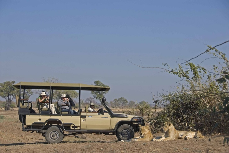 Game Drive in the South Luangwa National Park - Zambia