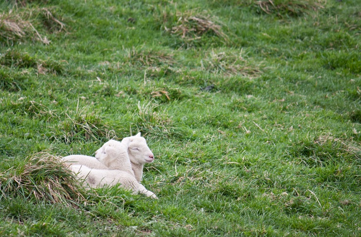 August 2012 - first lambs of the season