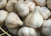 Garlic:  nature's wonder drug?  Garlic supplements benefits. http://antiagingbydesign.com/garlic-supplements-benefits